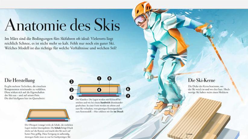Skifahren: Anatomie des Skis