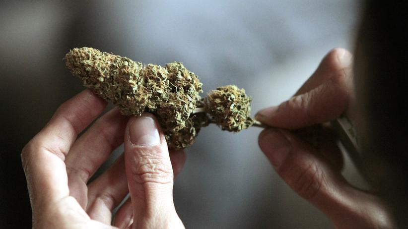 Wissen, Cannabis, Cannabis, Drogen, Drogenpolitik, Drogenkonsum, Meinungsforschung