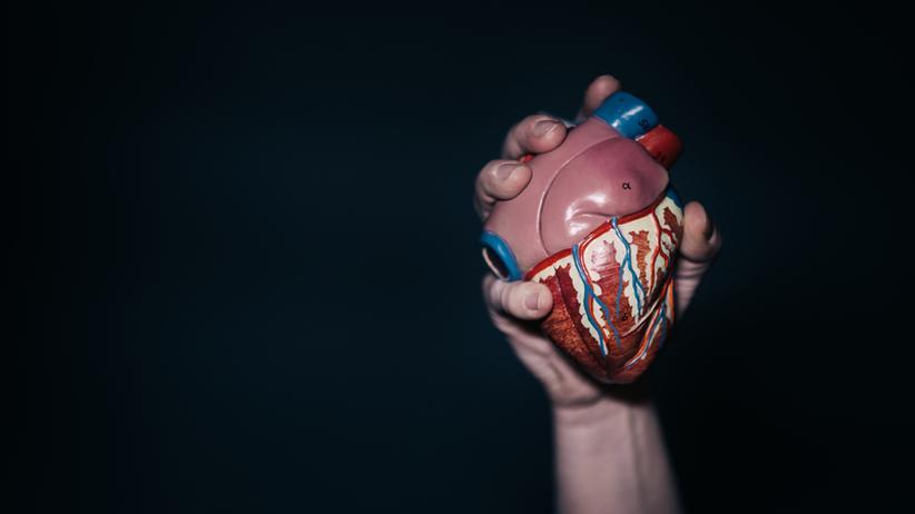 Wissen, Biotechnologie, Biotechnologie, Organspende, Herz, Körper, Mediziner