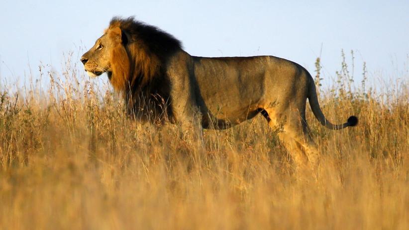Wissen, Großwildjagd, Tierschutz, Naturschutz, Jagd, Afrika, Wilderei