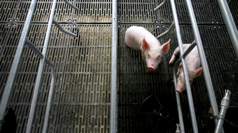 Landwirtschaft: EU-Parlament fordert Klonverbot für Nutztiere