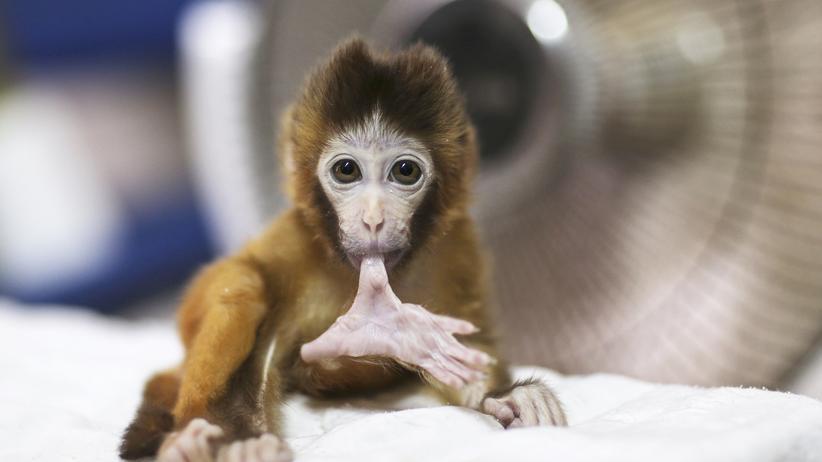 Wissen, Tierversuche,     Tierversuche, Tierschutz, Hirnforschung, Affe, Peta