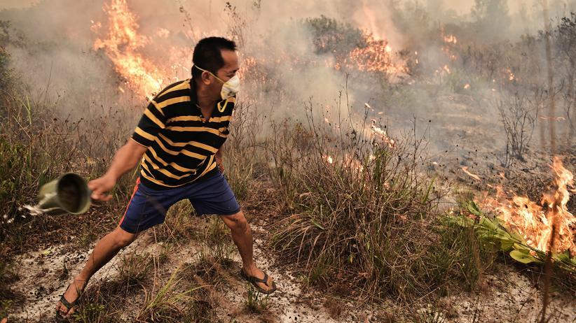 Klimawandel: Indonesien erstickt am Smog