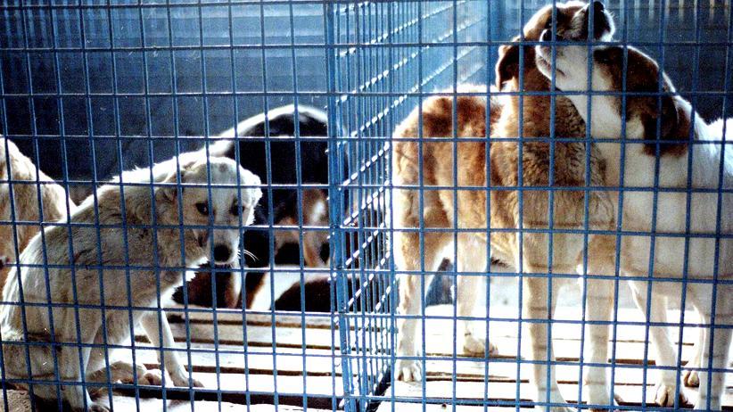 Wissen, Tierschutz, Haustiere, Tierschutz, Rumänien, Tier, Südosteuropa