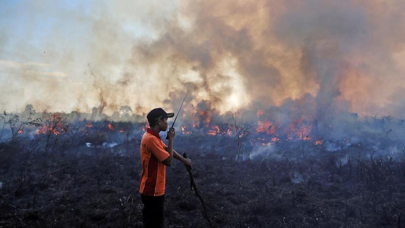 Umweltkatastrophe: Indonesiens Waldbrände gehen uns alle an