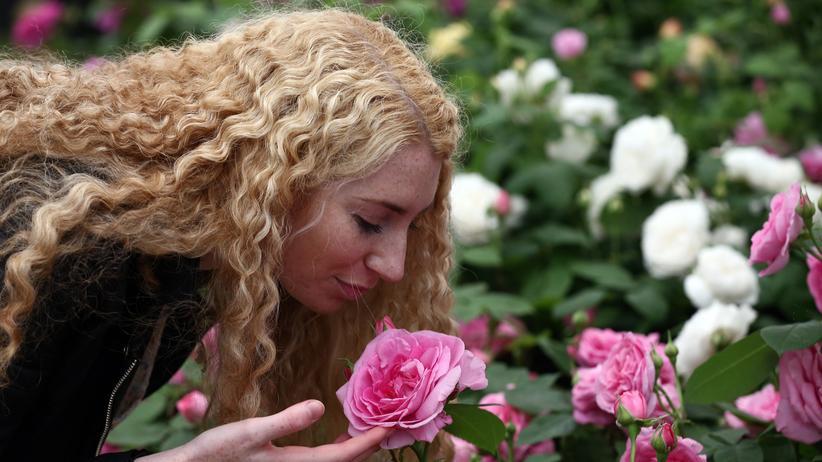 Riechen Geruchsforschung Blume Nase Riechzellen