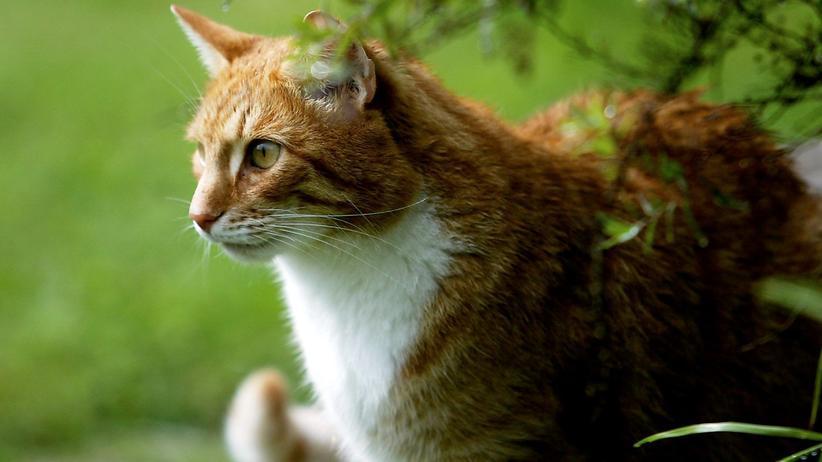 Tierschutz: Frei lebende Katzen sollen in Zukunft kastriert werden.