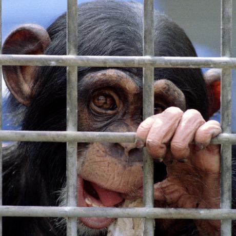Tierschutz: Tierversuche abschaffen! Geht das?