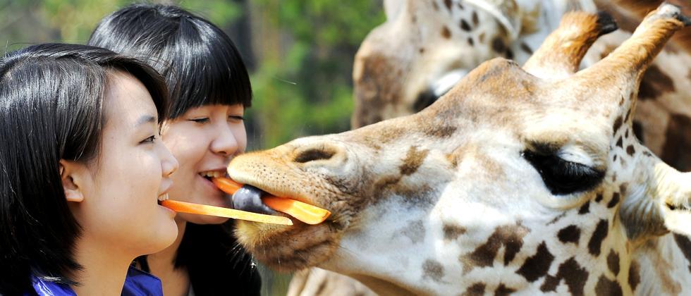Tierschutz Zoo Giraffe Tierhaltung Fütterung