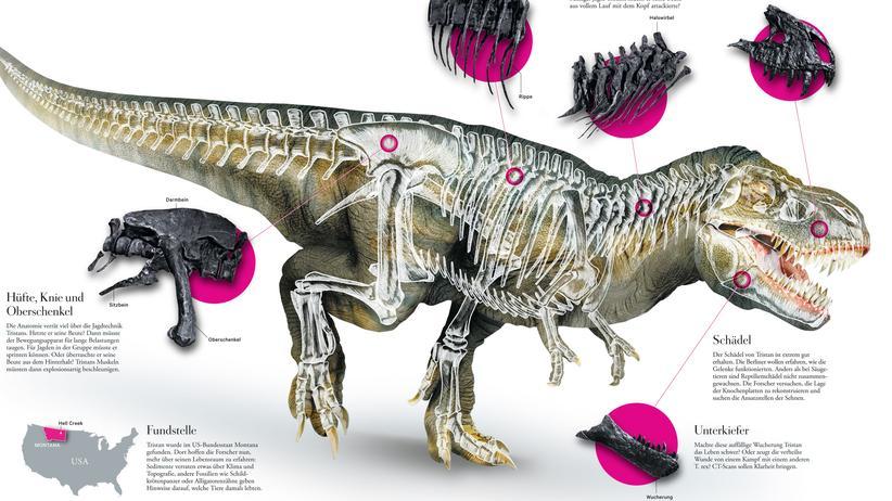 Tyrannosaurus Rex: Das große T.-Rätsel