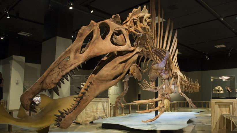 Dinosaurier: Spino, Berlins neuer Riesendino