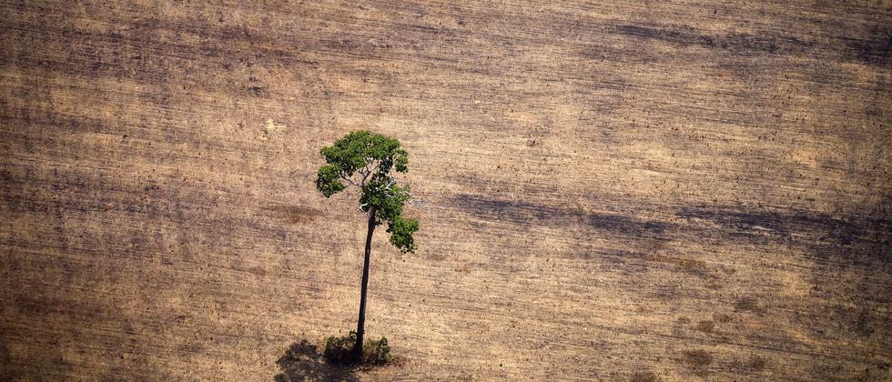 Abholzung im Amazonas
