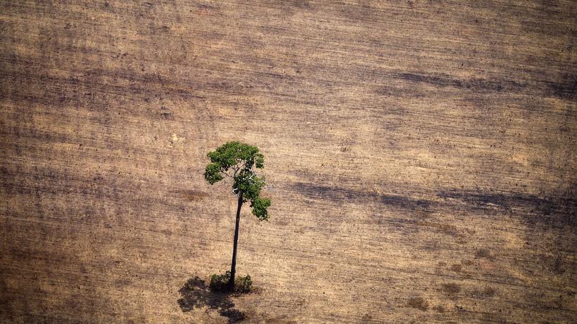 Indianer allein pflanzen Wald