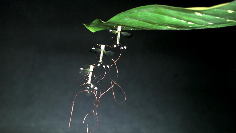 Bionik: Aufstieg der Insekten-Roboter