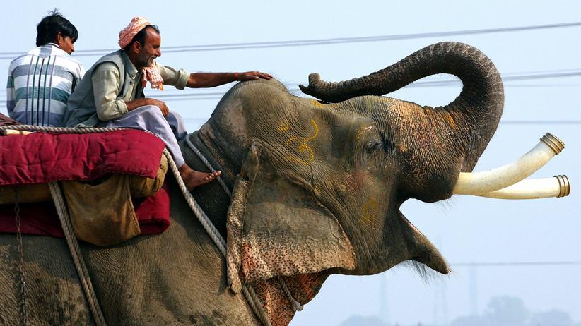 Artenschutz: Elefanten haben Charakter