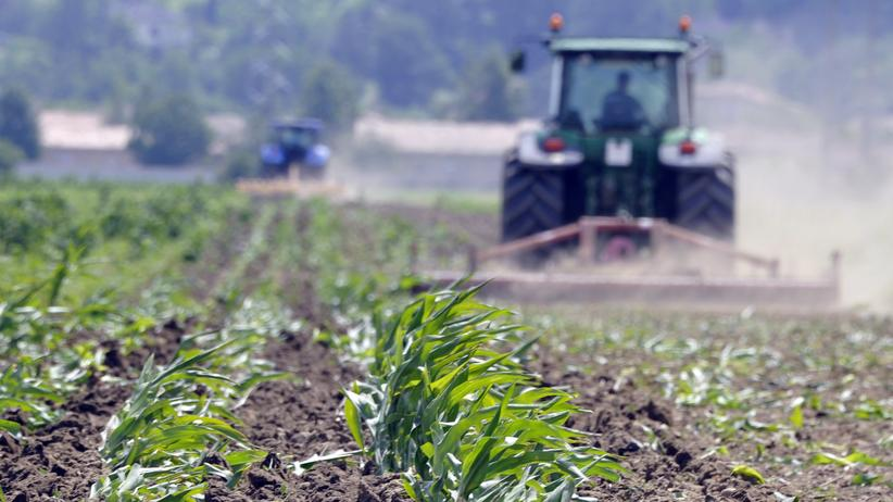 Grüne Gentechnik Landwirtschaft Ernährung