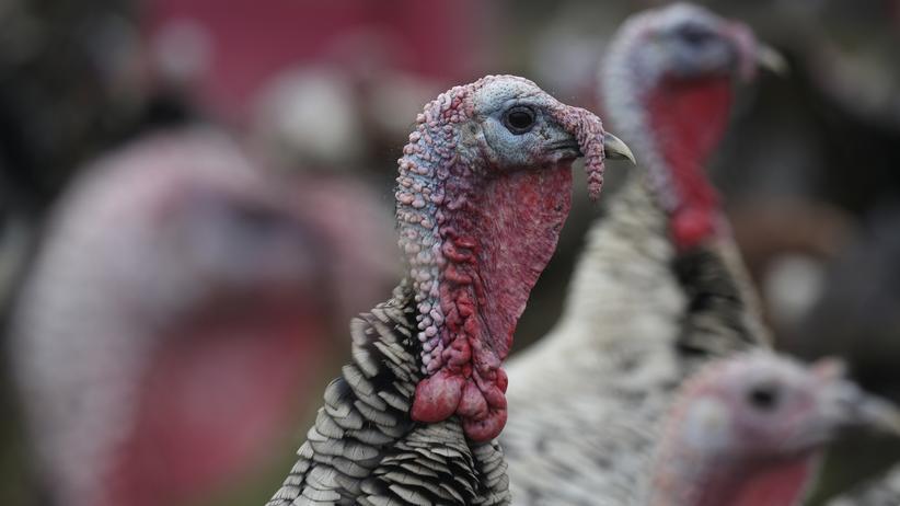 Vogelgrippe: Aggressive Geflügelpest breitet sich aus