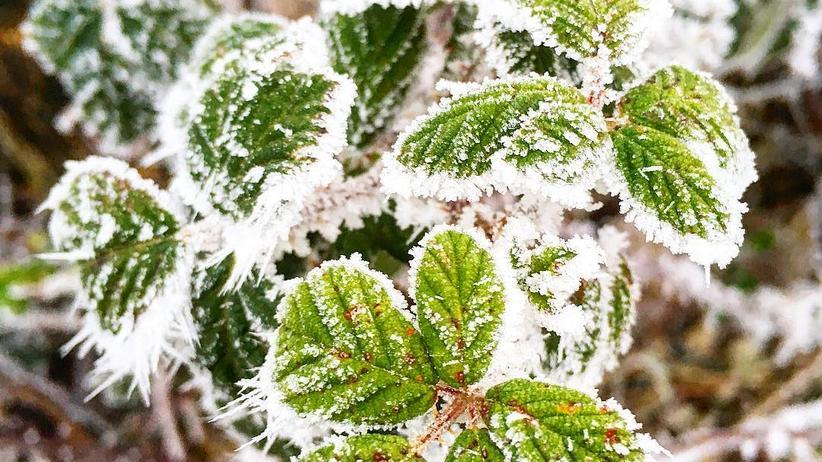 Winter: Die klirrende Kälte draußen vor den mit Eisblumen überzogenen Fensterscheiben