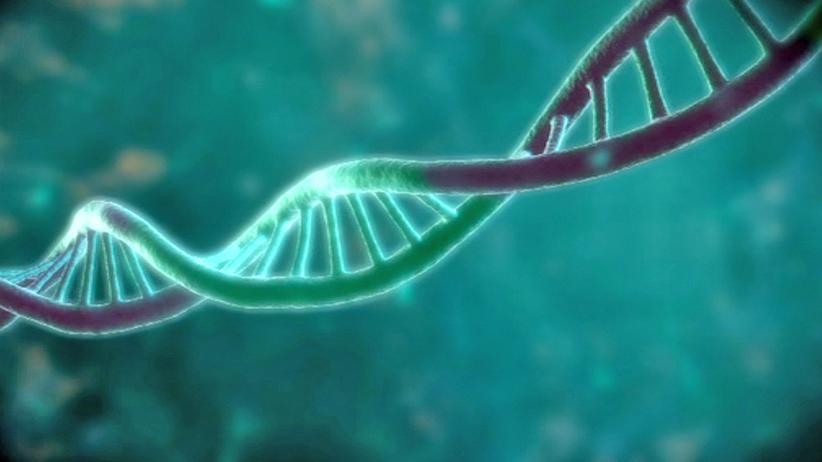 Datenspreicher: Die DNA – ein Strang aus Desoxyribonukleinsäure – liegt in jeder Zelle vor. Im Normalzustand als Doppelhelix.