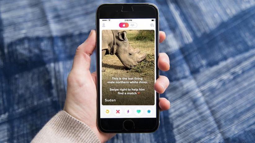 Artenschutz: Tinder will das letzte Nashorn retten
