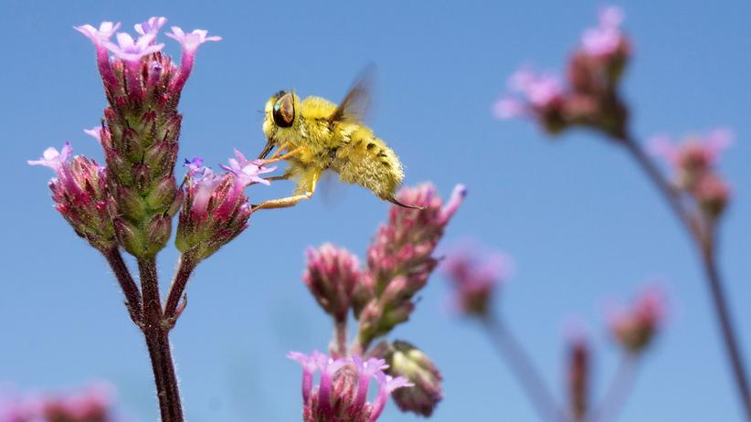 Insektensterben: Insekten sind die Grundlage unseres Ökosystems. Und sie sterben in Scharen.