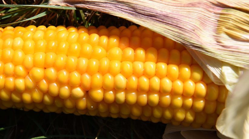 Pflanzenschutzmittel: Glyphosat ist seit den siebziger Jahren der weltweit am häufigsten eingesetzte Unkrautvernichter.