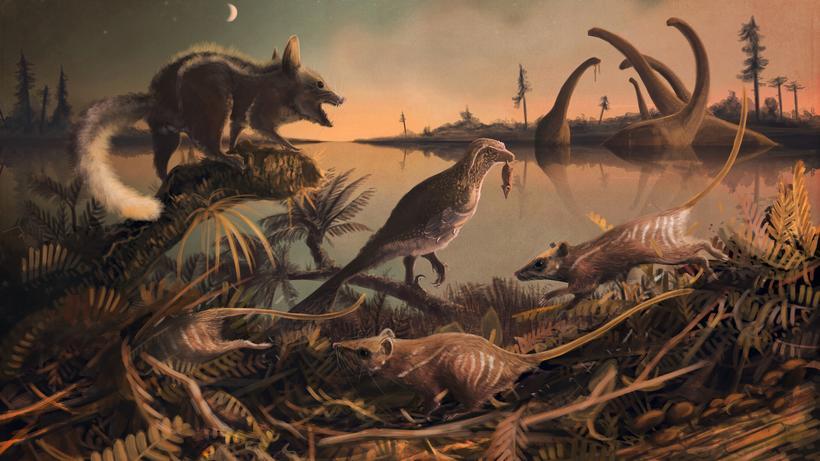 Evolution Unser Frühester Säugetier Vorfahr Eine Rattenmaus Zeit