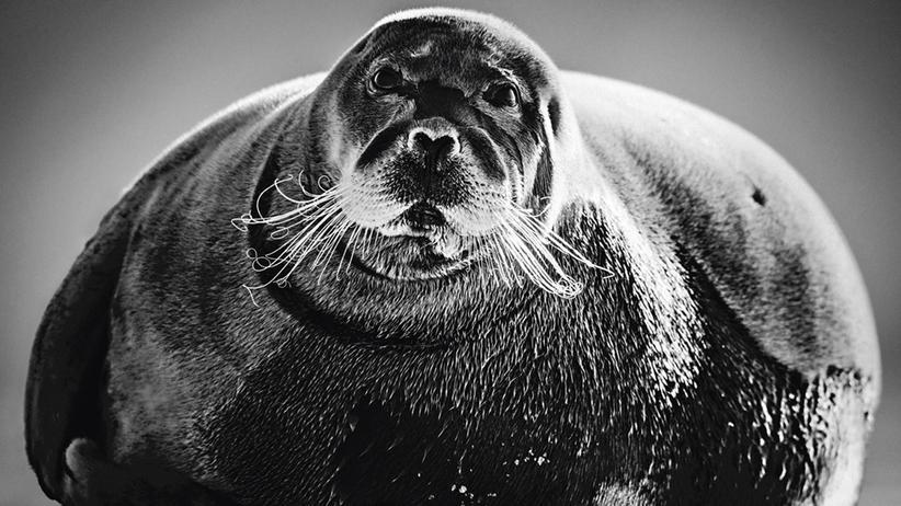 Arktis: Schwarz ist das neue Eis