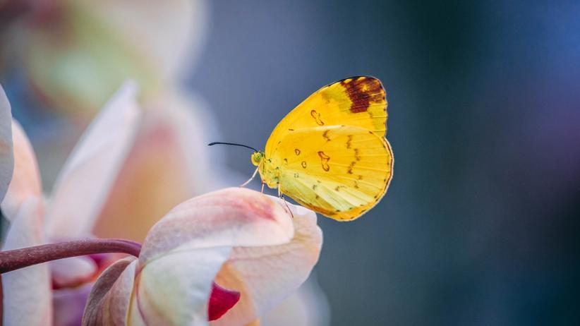 Evolution: Diese Hände erzählen, wie eine Schmetterlingspopulation ausstirbt