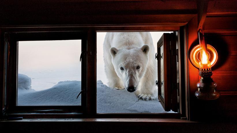 Born to Ice: Auge in Auge mit dem Eisbär