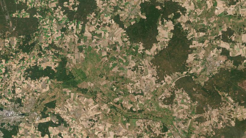 Hitze und Dürre: Das hält der Wald nicht aus