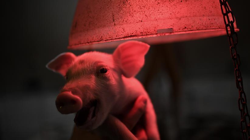Kastration: Lobbyarbeit statt Tierschutz