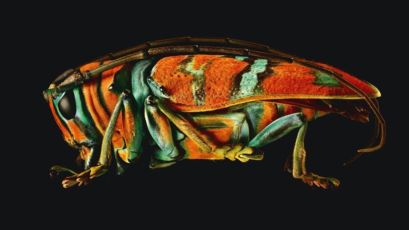 Insekten: Invasion der Riesenkrabbler