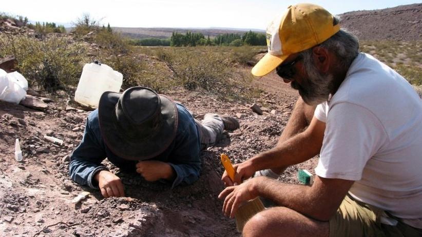 Lavocatisaurus agrioensis: Neue Dinosaurierart entdeckt