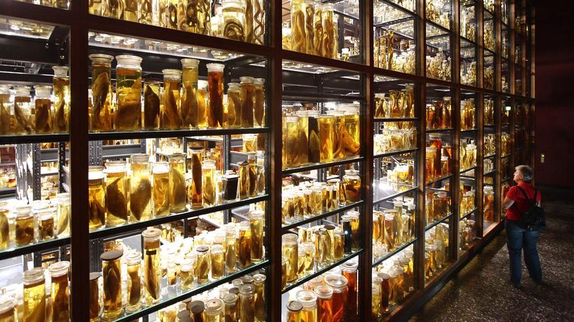 Naturkundemuseum Berlin: Ideen für das Überleben der Menschheit