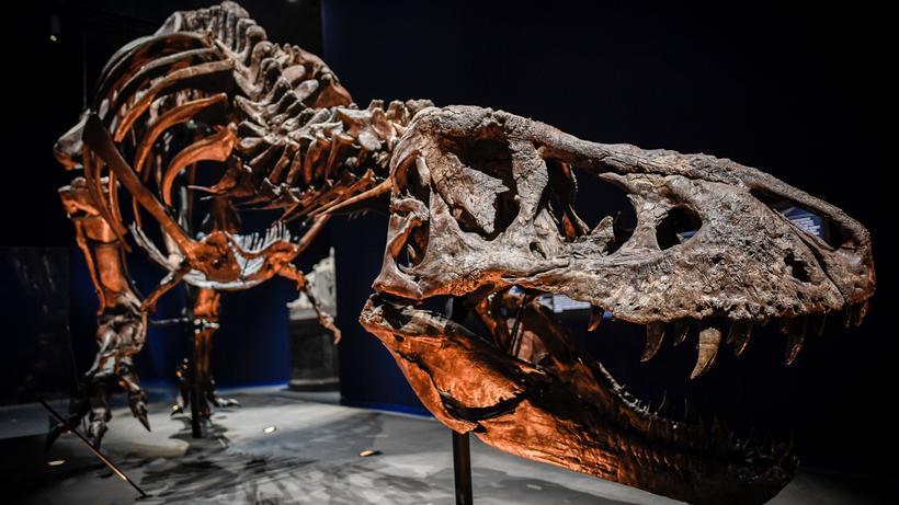 Dinosaurier Dinos Waren Gar Nicht Alle Grün Zeit Online