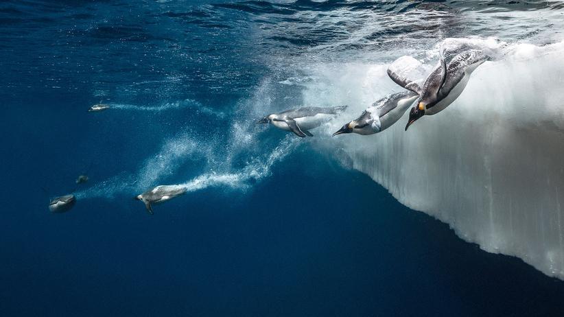 Antarktis: Auf Tauchgang im Eismeer