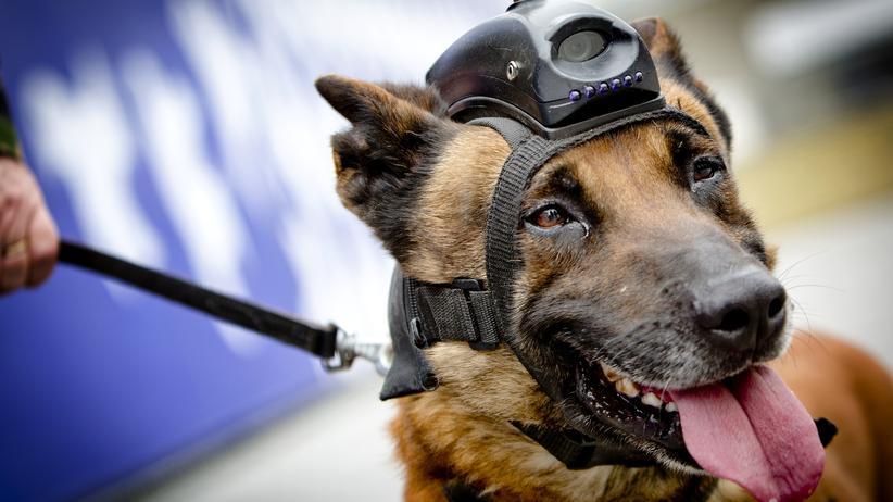 Spürhunde: Cyberdogs im Einsatz