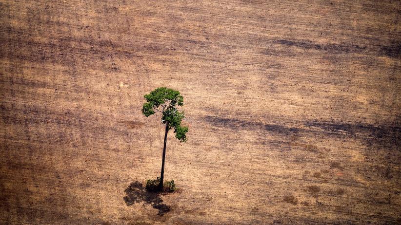 Amazonas: Norwegen setzt Zahlungen zum Regenwaldschutz aus