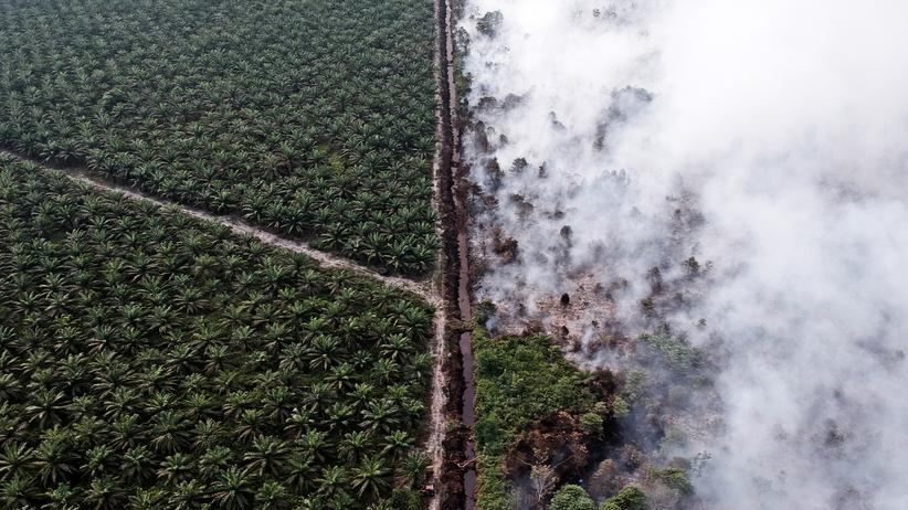 Sonderbericht zum Klimawandel: Brennende Palmölplantagen setzen Treibhausgase frei und tragen so dazu bei, dass sich das Klima aufheizt.