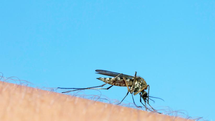 """West-Nil-Virus: """"Wärmere Sommer bedeuten mehr Viren in stechfreudigeren Mücken"""""""