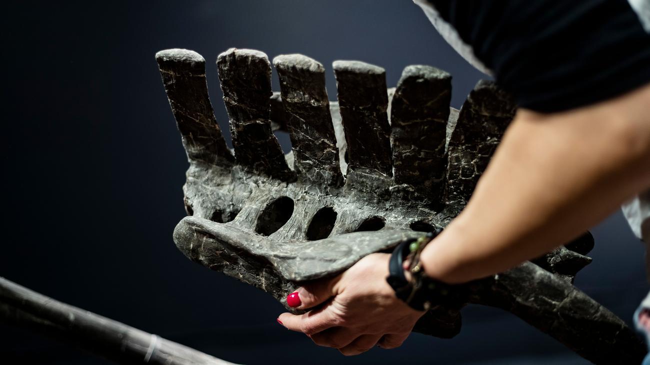 Asteroideneinschlag: Forscher identifizieren Grund für das Aussterben der Dinosaurier
