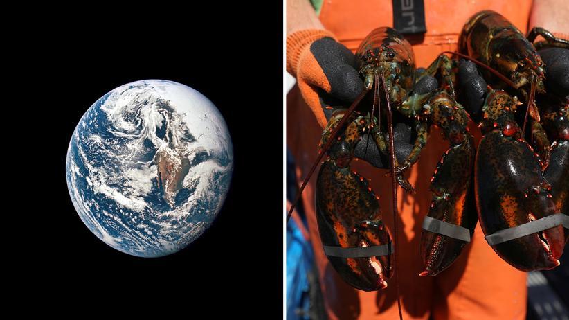 Weltklima: Was haben das Weltklima und das Hummerfischen in Maine miteinander zu tun? Einiges!