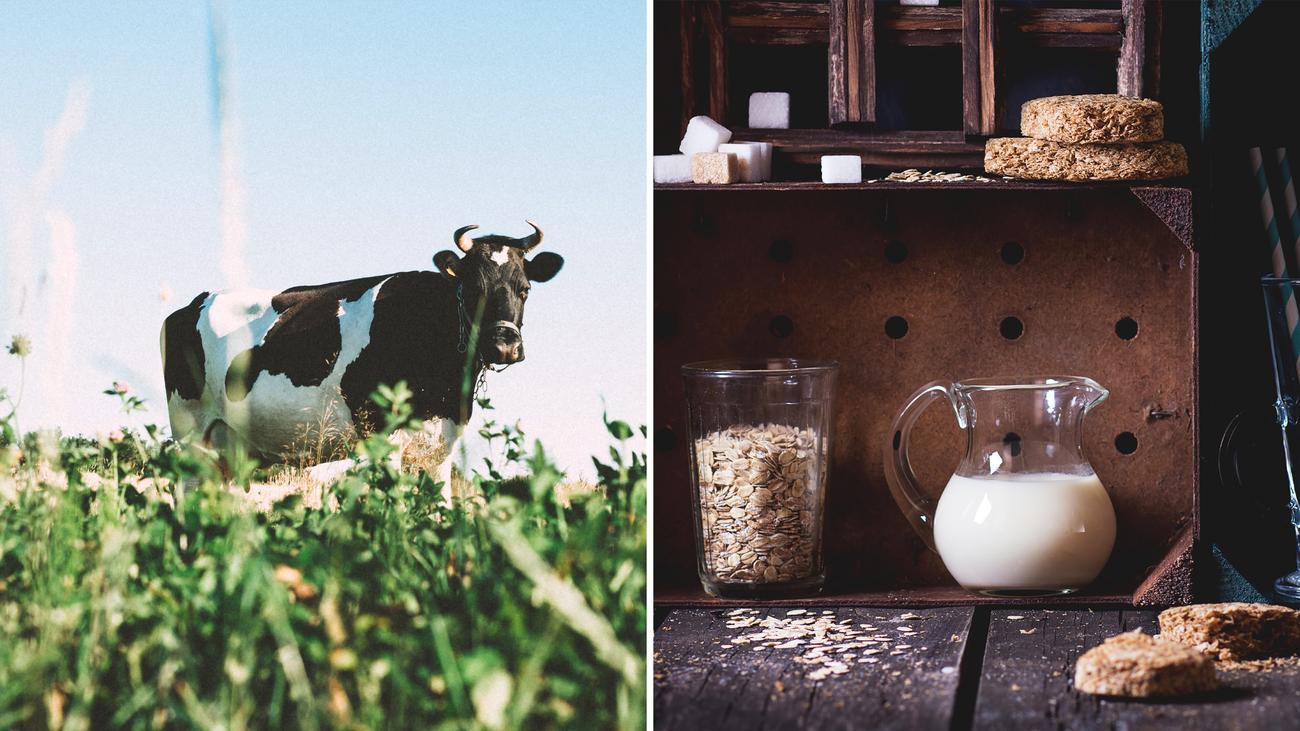 Nachhaltige Ernährung: Die Bessermilch