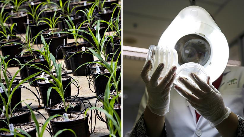 Bioökonomie: Statt Kohle, Öl und Gas sollen künftig Pflanzen, Tiere, Pilze und Bakterien zur Rohstoffgrundlage werden. Außerdem sollen sich Forschung und Industrie von der Raffinesse biologischer Systeme inspirieren lassen.