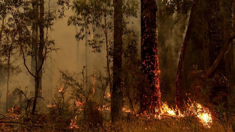 Brände in Australien: Waldbrand, Buschfeuer – wie heißt es richtig?