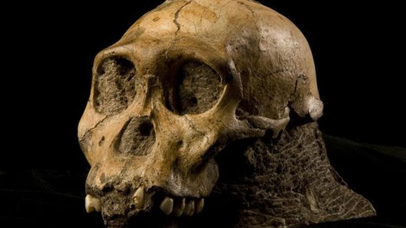 Anthropologie: Neu entdeckter Hominide schließt eine Lücke der Evolution
