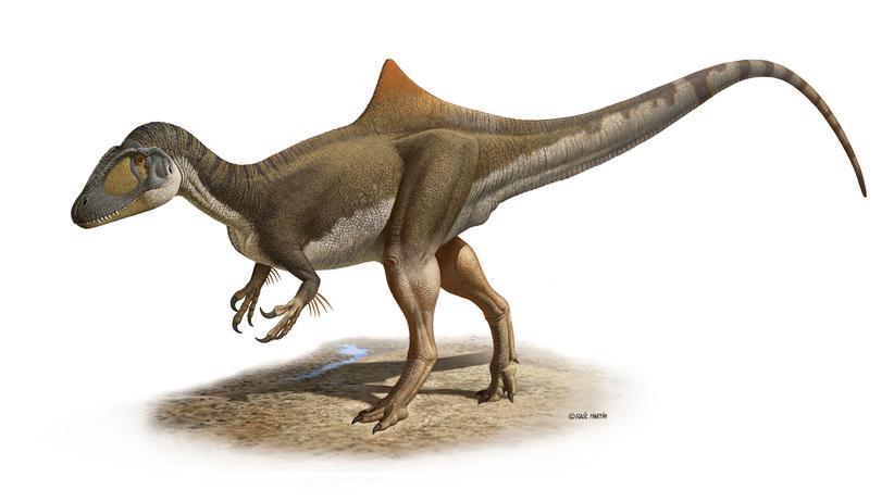 Fossilienfund: Spanische Forscher finden buckligen Raubsaurier
