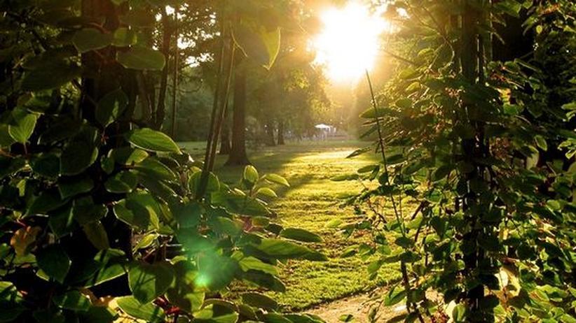 Schön, wie ein Garten Eden