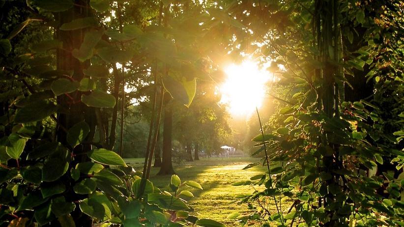 Berliner Gartenkolonie: Woodstock und Kommune im Kaiserreich